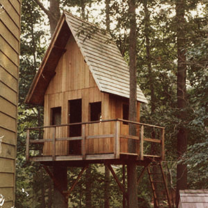 Mike's Tree House